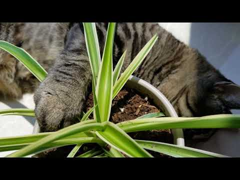 Feline Observational  - Tacy Cat in the City Jungle