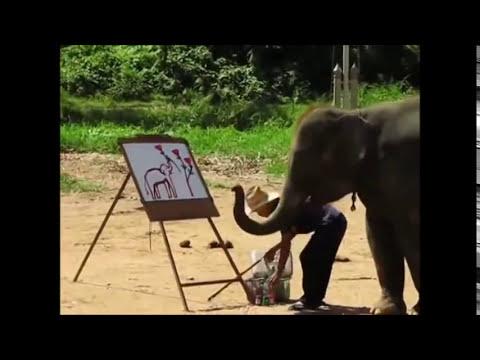 ELEFANTE PINTOR animales increibles