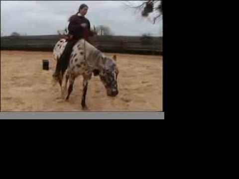 Dressage Appaloosa en libert
