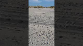 RC Buggy REELY Dune Fighter 3S @ Strand