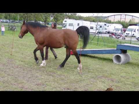 Horse-Agility.MP4