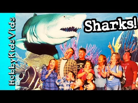 Shark Reef Aquarium! Real Sharks + Awesome Animals by HobbyKidsVids