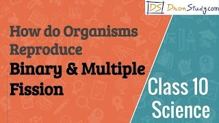 How do Organisms Reproduce - Binary & Multiple Fission : CBSE Class 10 X Science (Biology)
