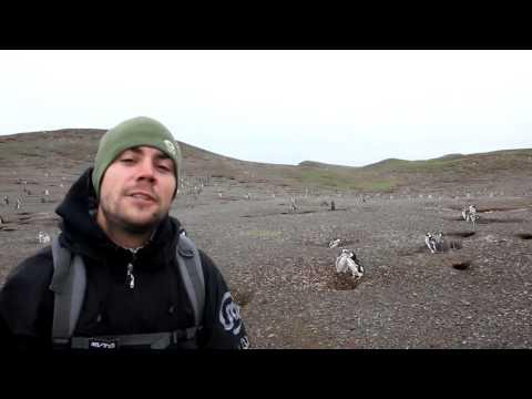 Best Job in the World Application - Wildlife Caretaker