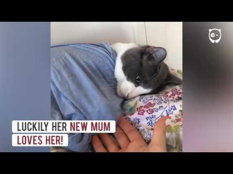 やんちゃ過ぎて前の飼い主に捨てられた猫が愛してくれる飼い主を見つけた!