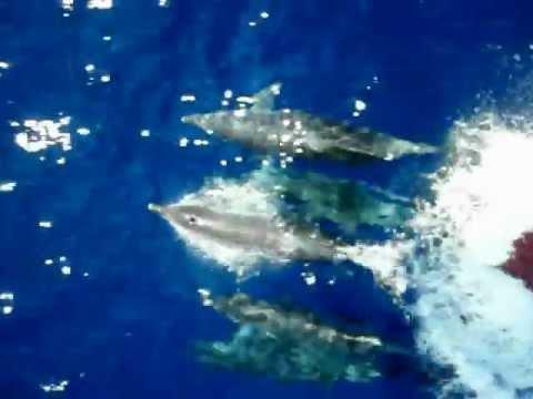 Lebanese Dolphin's family/Beirut-Lebanon/CANA boat