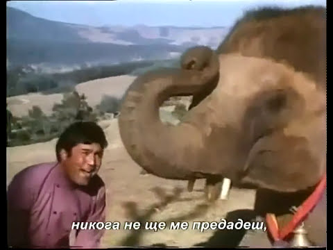 Mi Familia Elefante Haathi mere Saathi   Chal chal mere saathi.mp4