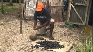 PARDI Solar Drying Canarium Nangi Nuts