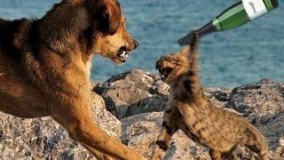 Hài động vật  ,  hài chó mèo . siêu buồn cười