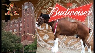 Visiting the Budweiser Brewery in St Louis with The Legend