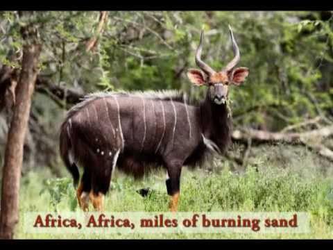 Africa Song for Kids | Meet African Animals