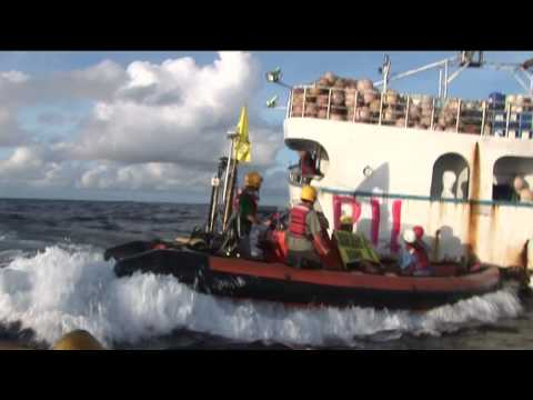 Greenpeace heads out to defend Pacific tuna stocks (2009)