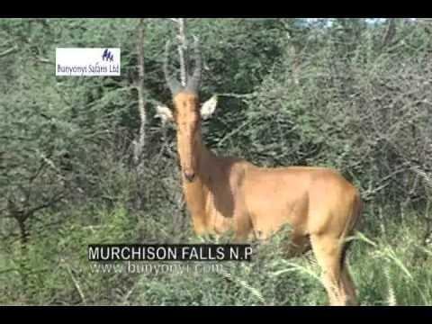 Uganda Safari film by Bunyonyi Safaris Ltd, a local tour operator.