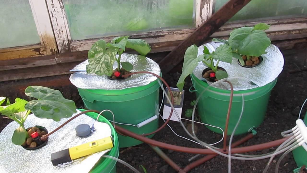 Гидропоника своими руками для огурцов и томатов в домашних условиях 63