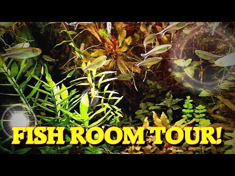 Bentley Pascoe Fish Room Tour!