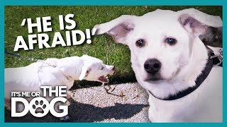 Dog's Anxiety Causes Him to Lash Out at Others | It's Me or The Dog