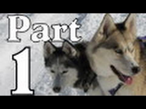 Part 1 Presentation at Besser Musuem Sled Dogs Snow Dogs Siberian Huskies