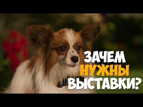 Зачем нужны выставки собак?