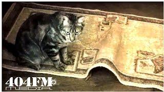 Смешной кот играет и охотится на еду | Funny cat plays and hunts food