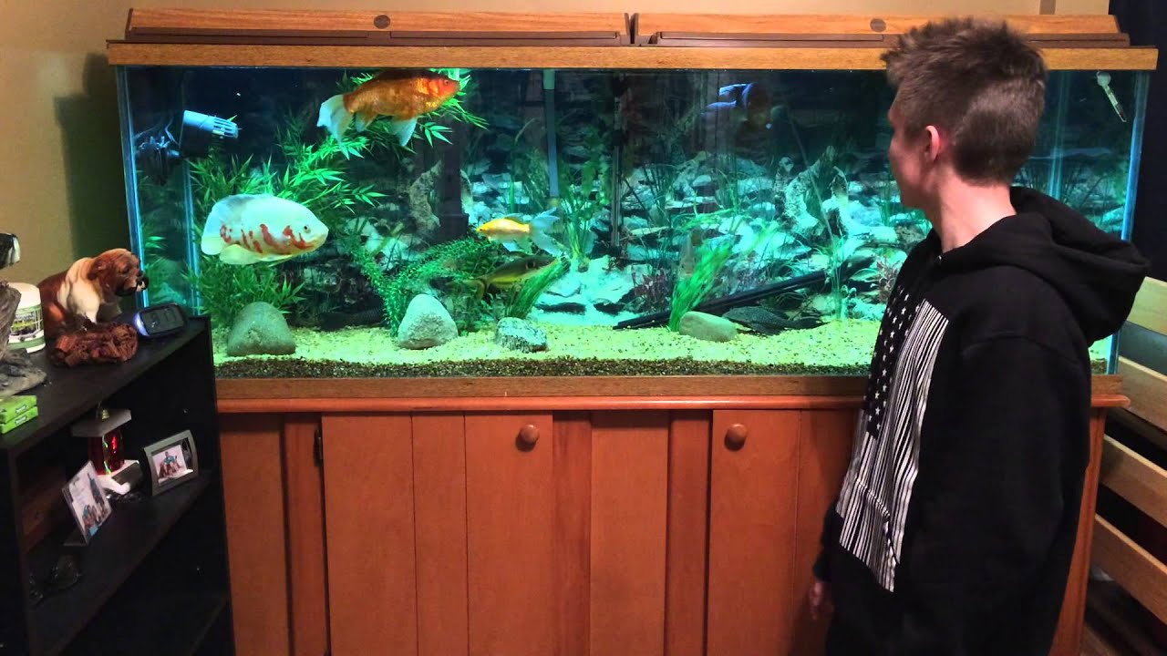 135 gallon fish tank youtube for Youtube fish tank