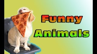 Animals Highlights - FUNNY ANIMALS VIDEO