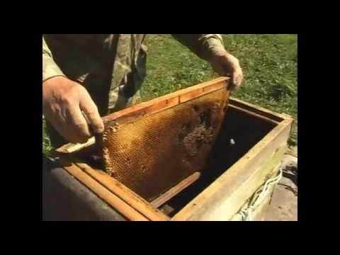 Ловушки на пчел своими руками