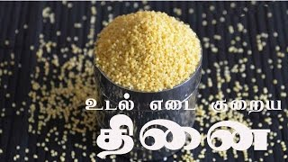 Weight Loss Diet in Tamil – About Thinai - Fox Tail Millet