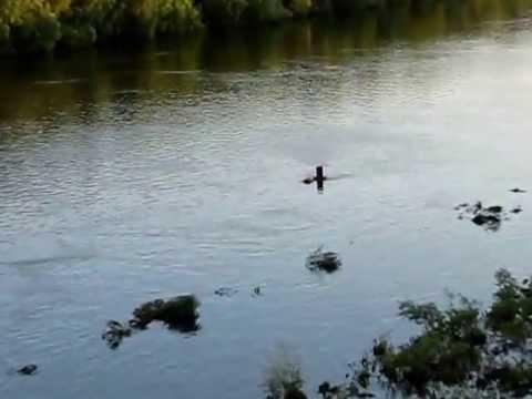 ловля на фидер в половодье видео