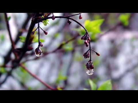 Instrumental Guitar Music ▶ Meditation, Relaxation, Yoga, Work, Sleep, Stress, Mind (HD)