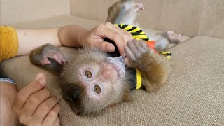 Monkey Baby Nui | Take a Nui style