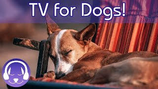 Dog TV : TV for Sleepless Dogs! The Best Entertaining TV for Dogs Combined with Relaxing Music!