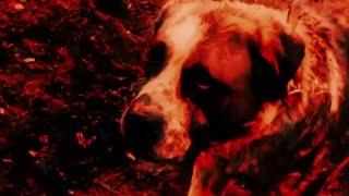 CHARLY FIASCO - Les chiens de la classe