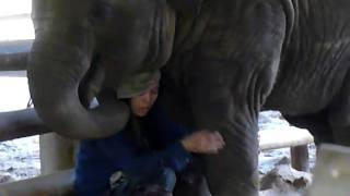 Lullaby to a baby elephant