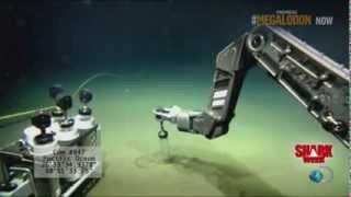 Megalodon Shark Caught On Camera   62 Feet Long Shocking