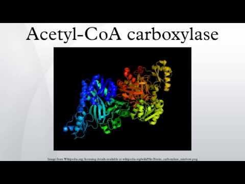 Coa vs Acetyl Coa Acetyl-coa Carboxylase