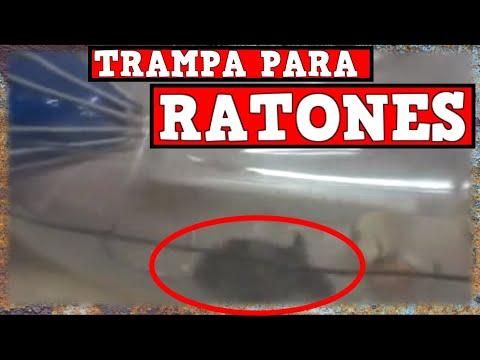 Trampa automatica para capturar ratones con botella de - Como hacer una trampa para ratas ...