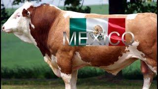 MÉXICO, Gran Productor y Exportador - La Carne de Res Mexicana Está Conquistando el Mundo