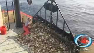 """SeaTube: """"All About Scallops"""" - OceansFleet Fisheries - An Informative Series"""