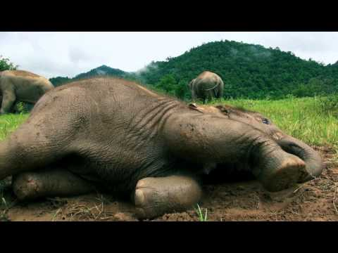 Elephant Nature Park and Navann's herd