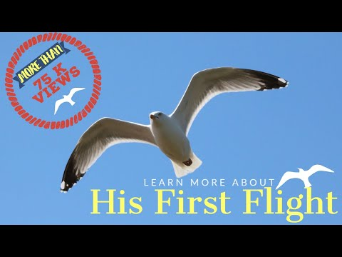 his first flight essay His first flight his first flight by liam o' flaherty every first step in life needs courage and self confidence to cover a distance of hundred miles we have.