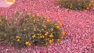 Plantando arbustos de la región en nuestro jardín