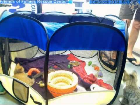 Trucker, Cayden, Vernon and  Abner play in the playpen - 2014-08-04