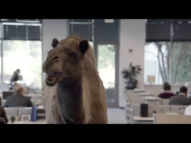 Hump Day Camel Geico Gif Geico Hump Day Remix Quot