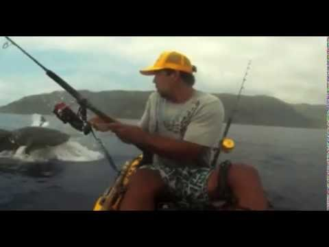 Shark Steals Fisherman's Catch By Surprise! video