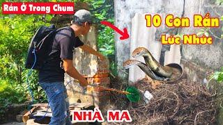 Cuộc Gọi Kêu Cứu #13 Ổ 10 Con Rắn Hổ Mang Bò Lổm Ngổm Trong Chiếc Chum Cổ Nhà Hoang