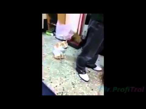 Кошка защитник, Новые Приколы, Шутки, Смешные ролики Юмор! Прикол! Смех