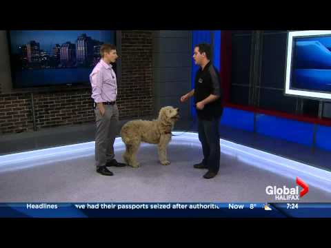 How to teach your dog to come when called - Halifax Global Morning News