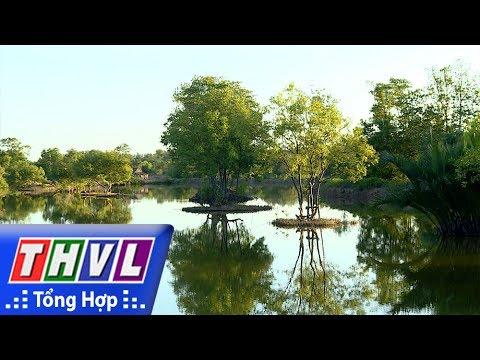 THVL | Nhịp sống đồng bằng - Nhịp sống Trà Vinh: Rừng đước sinh thái vùng duyên hải