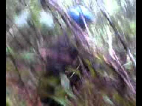 Mesum Anak Smp Di Hutan video