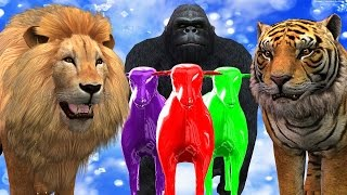 Lion Tiger Cheetah Attack Colours Sheep Finger Family Song    3D Animation Nursery Rhymes For Babies